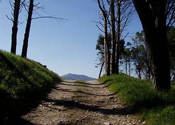 riserva bosco d'alcamo